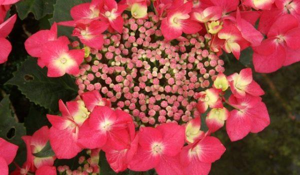 Piccolo è il fiore, eppure diffonde il suo profumo fra le piante che lo circondano