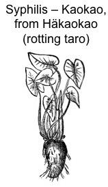 Harry Uhane Jim la pianta del Taro
