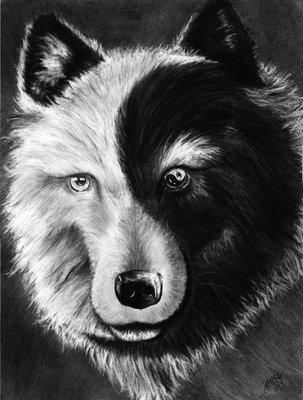 I due lupi la vera leggenda Cherokee