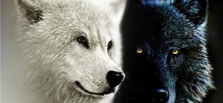 I due lupi leggenda Cherokee