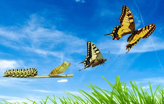 il potere di adesso cambiamento bruco farfalla